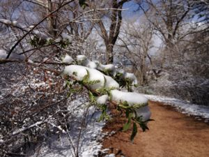 park_snow4.jpg
